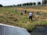 集草作業の様子